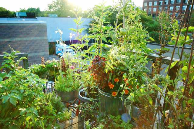 gt_roof_august4_2008