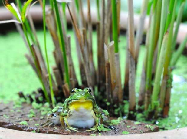 frogboy-in-the-reeds