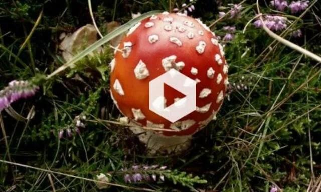 mushroom video opening image