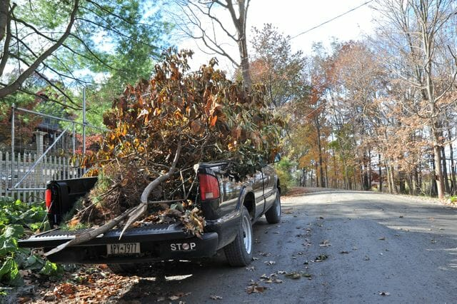 carting away damaged branches