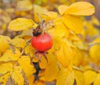 going for the gold: the last gasps of autumn