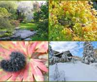 the 2011 garden in photos: a year of extremes
