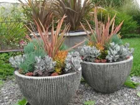 Phormium and succulent pots by Hyland Garden Design