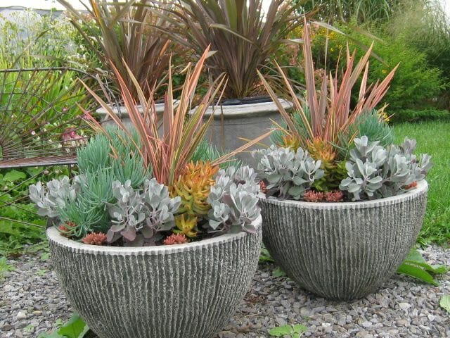 Phormium and succulent pots by Hyland Garden Design
