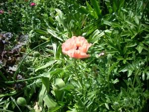 5-11-2012-fargo-hoyne-rpgg-garden-001-3eadb16835ddf7523bcd0780242e0657756043e9