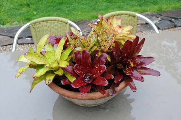 bowl-of-bromeliads