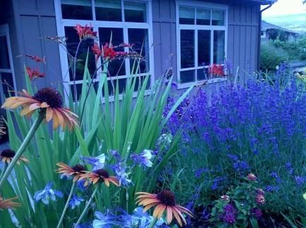 garden-july-2011-4-b993a9ef73ee2ad3c60e12ce05a7e54619d6a246