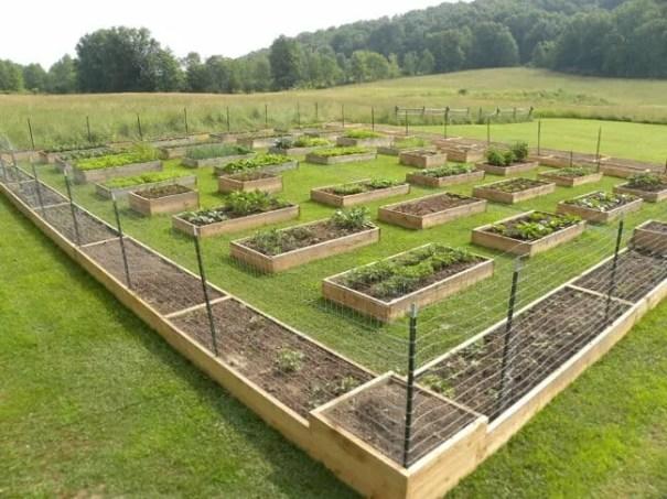 kitchen-garden-76afaaec81b1409cdaa30cd0428b6e44c7d0511d