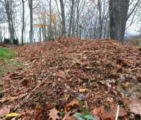 putting leaves to work: shredding 101, with mike mcgrath