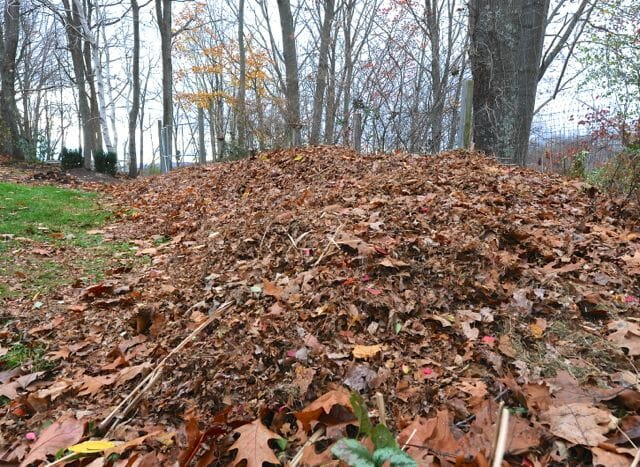 My compost heap in late fall