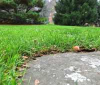 rethinking how i mow, and late-fall lawn tips