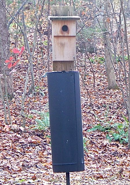 Eastern bluebird house with baffle