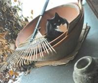my funny valentine: jack in the pot