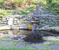removing leaves and dead plants from water garden