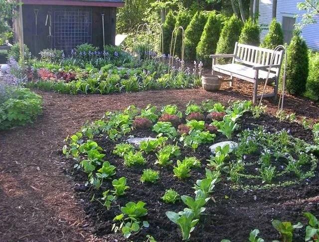 Ellen Ogden's kitchen garden