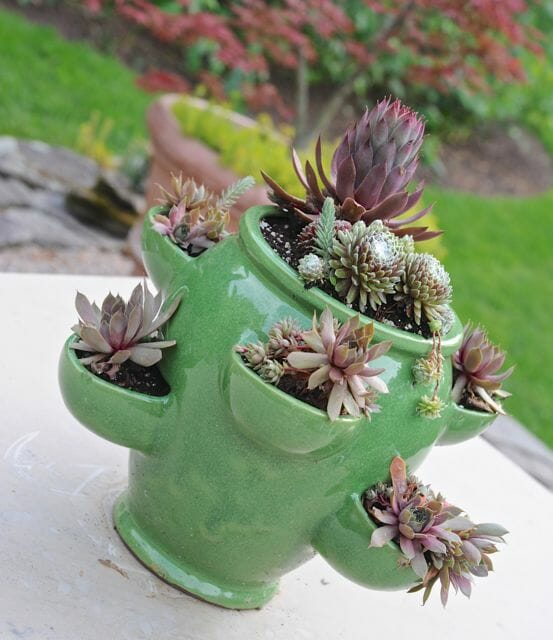 A strawberry jar of succulents just potted up