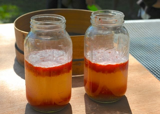 Tomato seed fermenting at Seed Library.