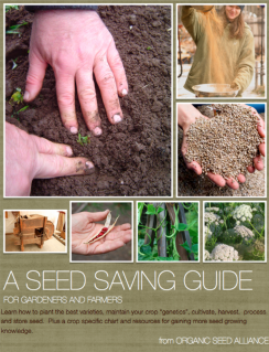 Organic Seed Alliance seed-saving guide