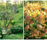 q&a: pruning hydrangea, late planting, and more