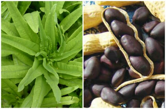 Sword lettuce and black peanuts