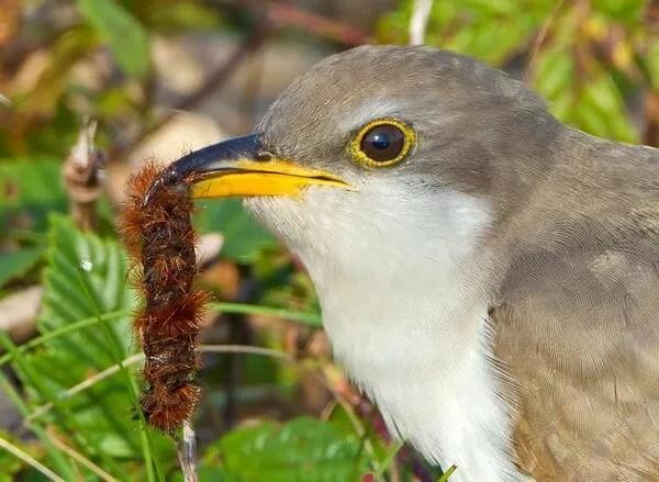 How Birds Find Their Food With Ellen Blackstone Of Birdnote