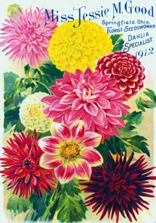 Vintage dahlia catalog, from Old House Gardens' collection