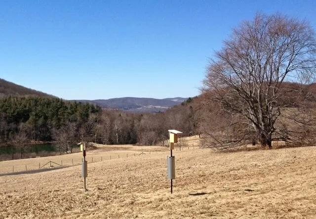 Experto de Bluebird dice que el hábitat es clave para poner una casa de bluebird exitosa | Syracuse.com