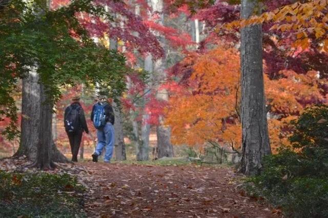 steinhart fall open day