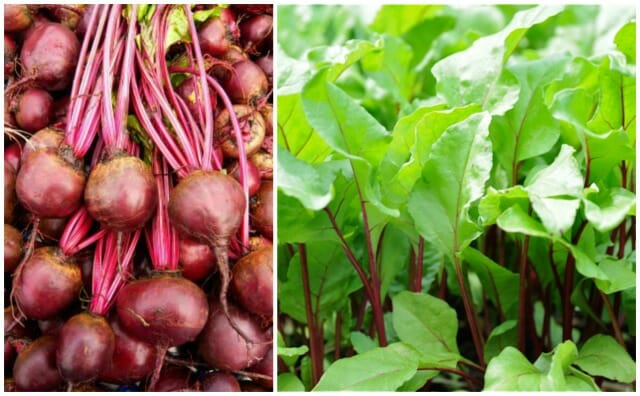 feuer kugel beet plus young greens