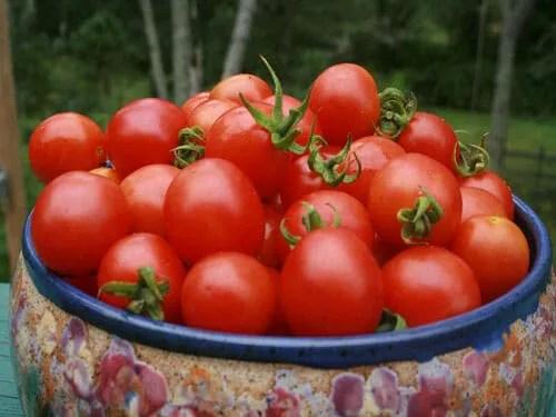 v-tomato-principe-borghese