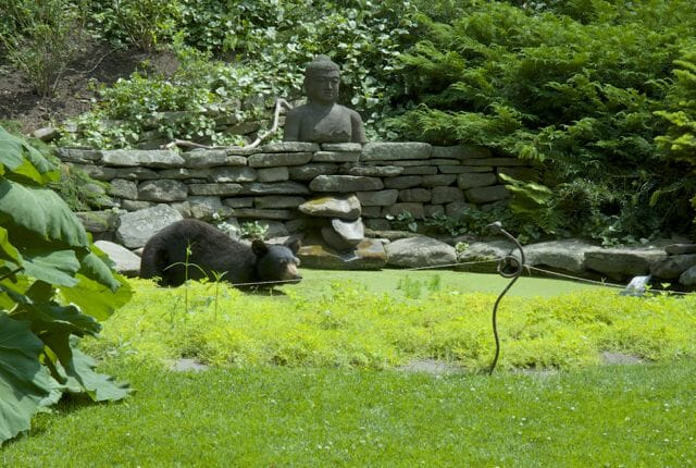 bear in water garden