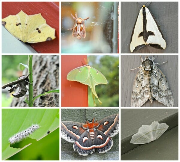 moth collage