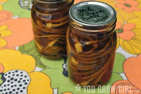 garlicscape_pickle