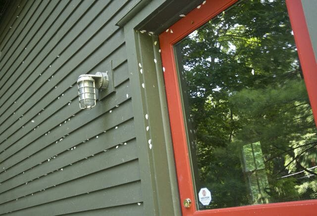 lesser maple spanworms on barn