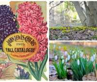 extending spring bloom from bulbs, with scott kunst