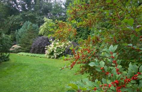 On the far edge of the garden, long shrub borders with red winterberry (foreground), and hydrangea and Physocarpus in the distance.