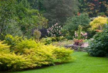 The golden Tiger Eye cutleaf staghorn sumac catches the eye even from far across the garden.