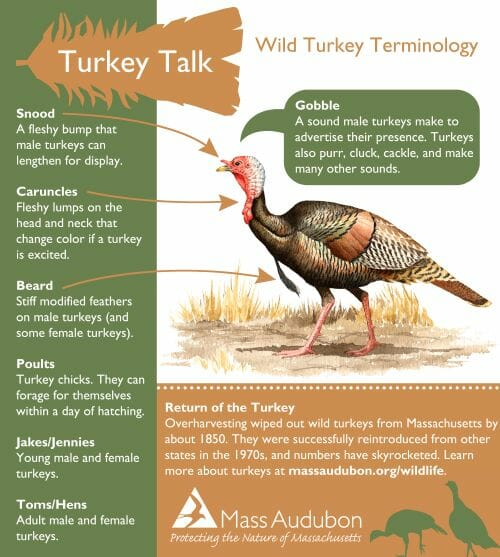copyright Mass Audubon