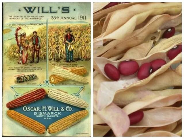 will catalog and hidatsa red bean