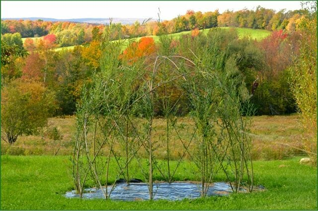 creating living willow structures with michael dodge a way to garden