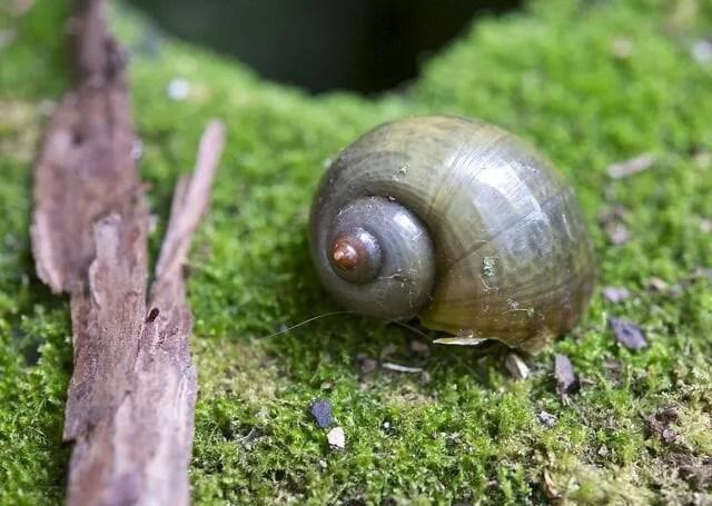 alien snail