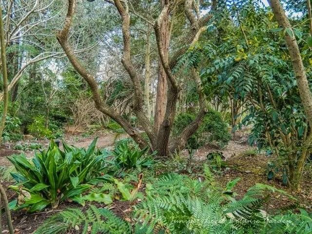 copyright juniper level botanic garden