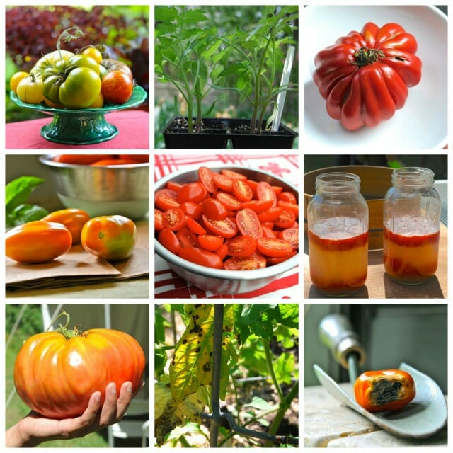 tomato tips collage