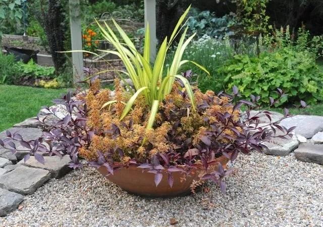 phormium and coleus in big bowl