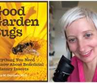 cultivating 'good garden bugs,' with dr. mary gardiner