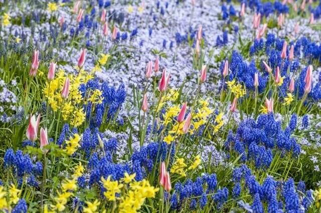 p. 251 flowering bulbs