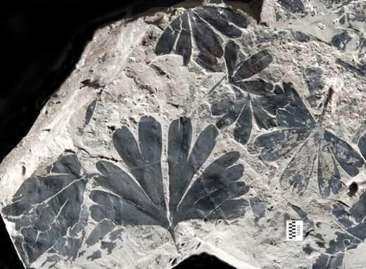 JE-Sch1542+a+part+a+fine+fossil.cropd
