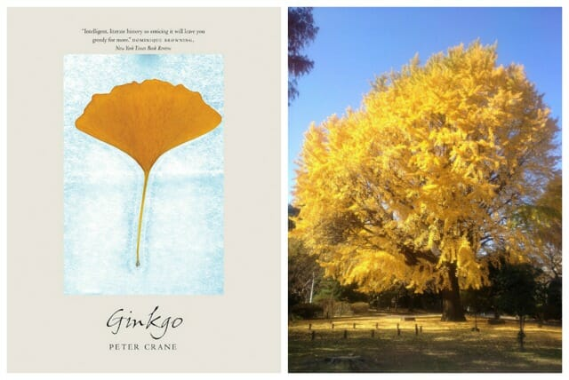 ginkgo book
