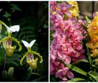 6 easiest orchids to grow, with longwood's greg griffis