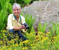 may 7 spring wildflower walk with carol gracie